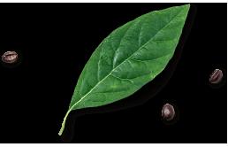 leaf-footer